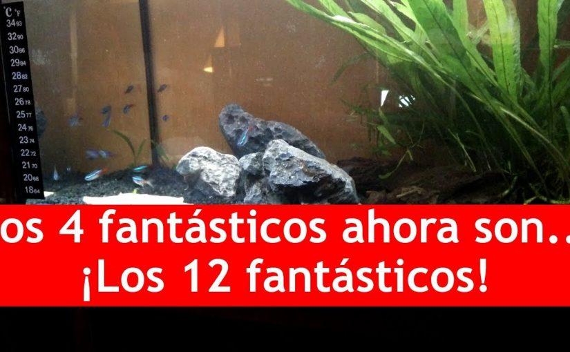 Los 12 fantásticos | VLog peceril :P